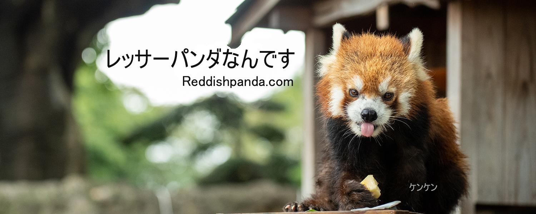 レッサーパンダなんです。reddishpanda.com